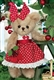 Bearington Bears Anita Cherry 10 inch Plush Bear 143301