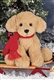 Bearington Plush 8 inch Puppy Grizwald 174012