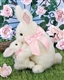 Bearington Bears 'Some Bunny Loves You' 12in Plush Bunny Rabbit